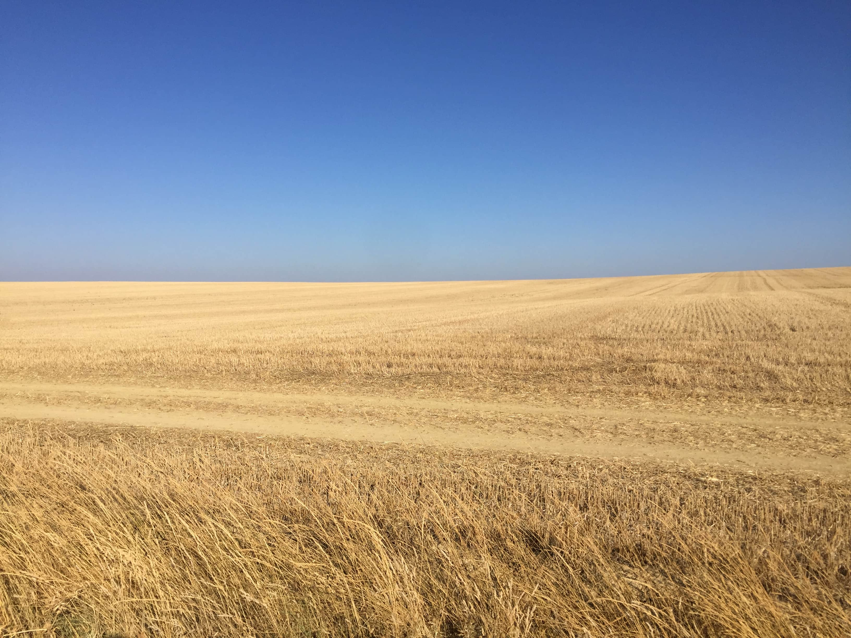Where the sky meets the wheat