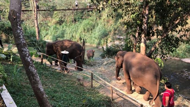 elephants wandering by