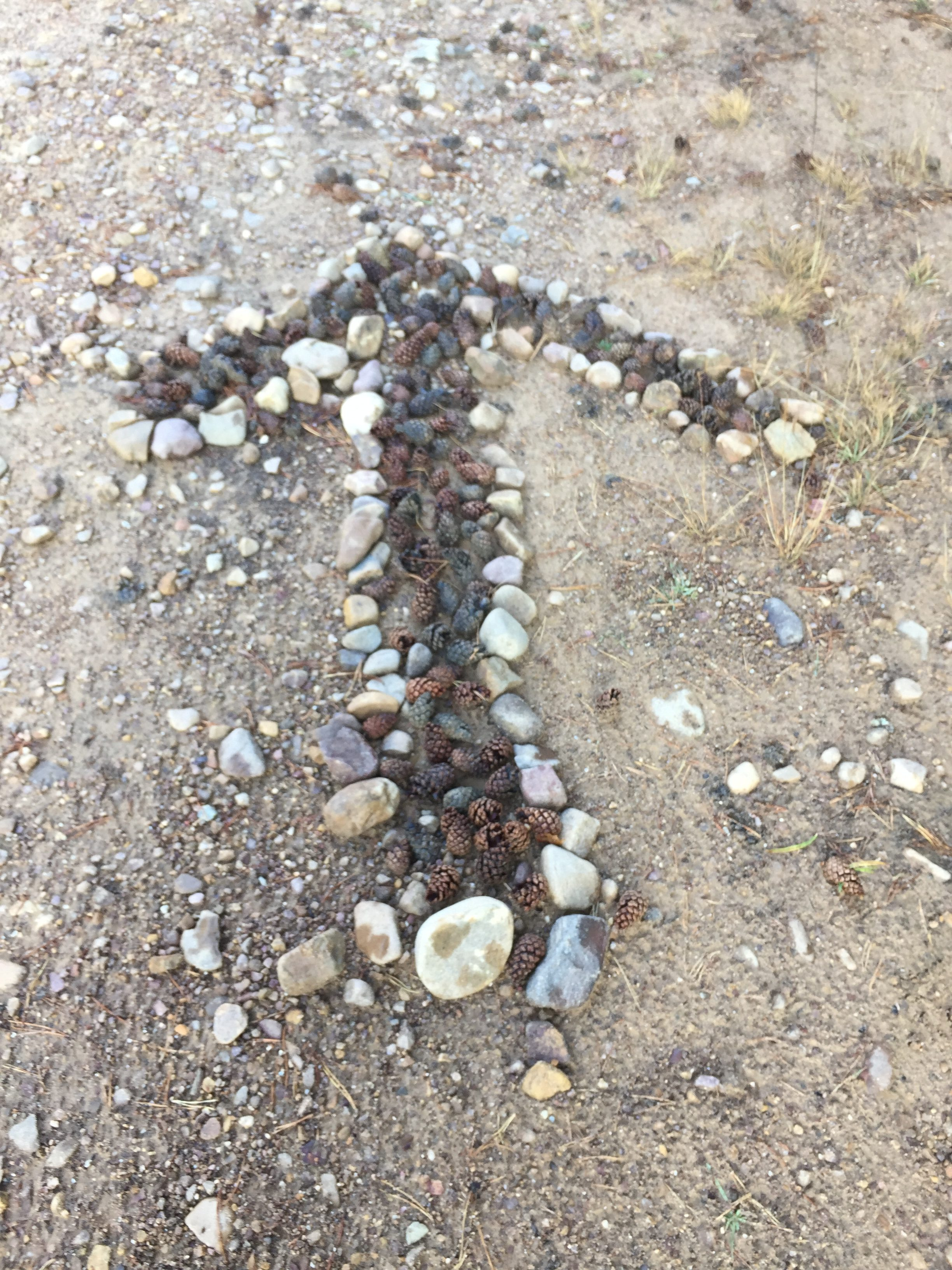 many arrows made by rocks and pinecones