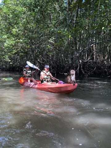 Kayaking through the mangroves