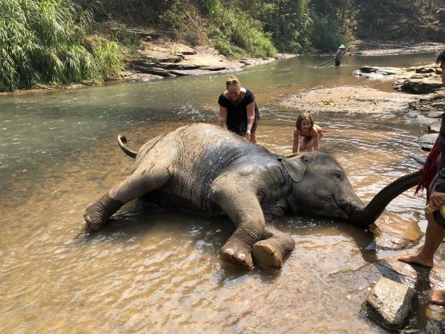 Bathing baby elephants