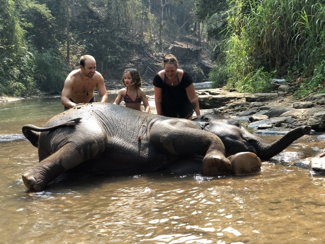 Bathing baby elephants