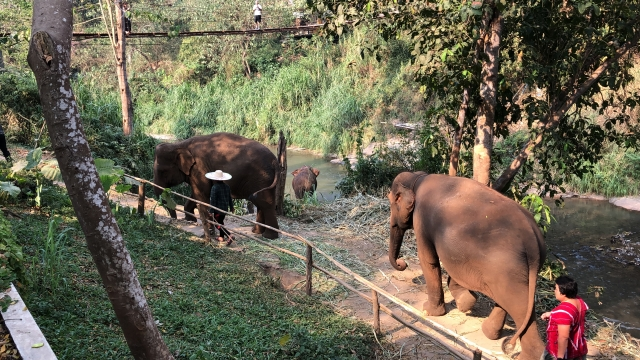 elephants wandering by