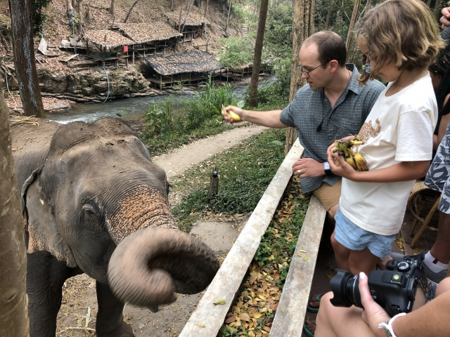 Feeding elephants from the restaurant