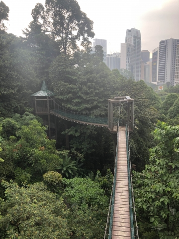 The tree top walk in the jungle in the city centre