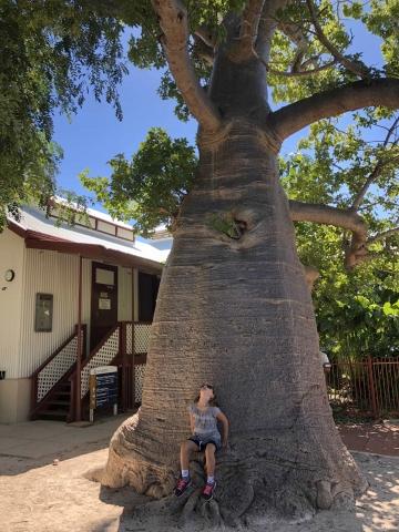 Big Boab tree