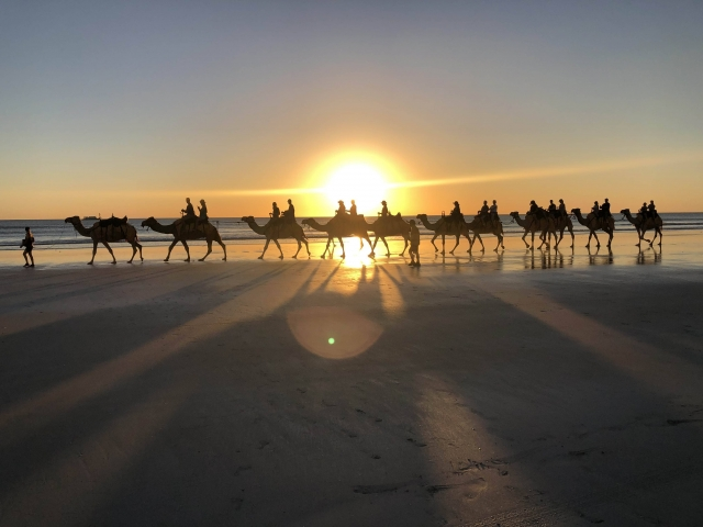 Camels at cable beach