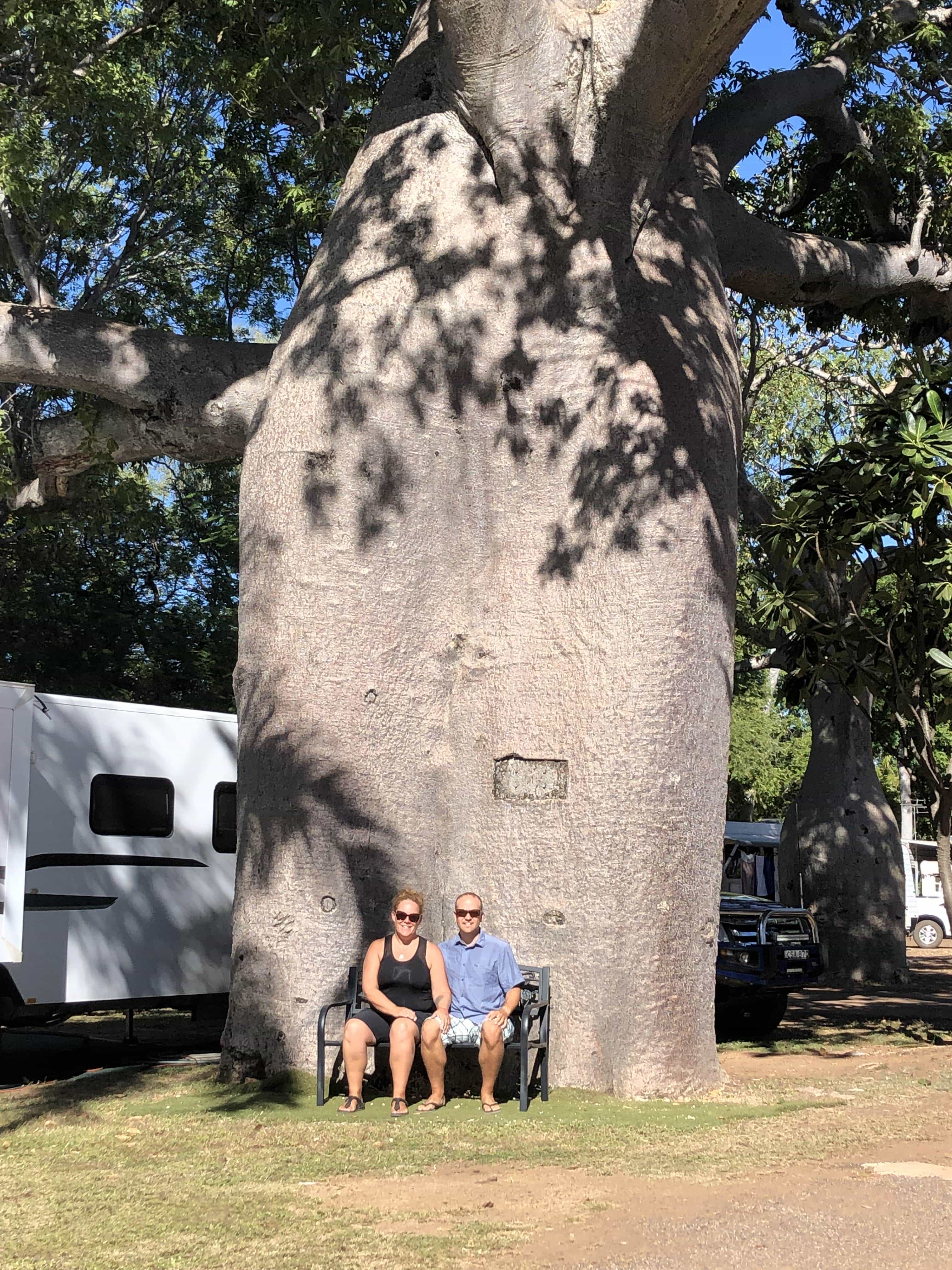 Giant boab tree at the caravan park