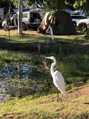 beautiful birds at the caravan park